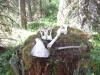 3084-bones-on-the-trail
