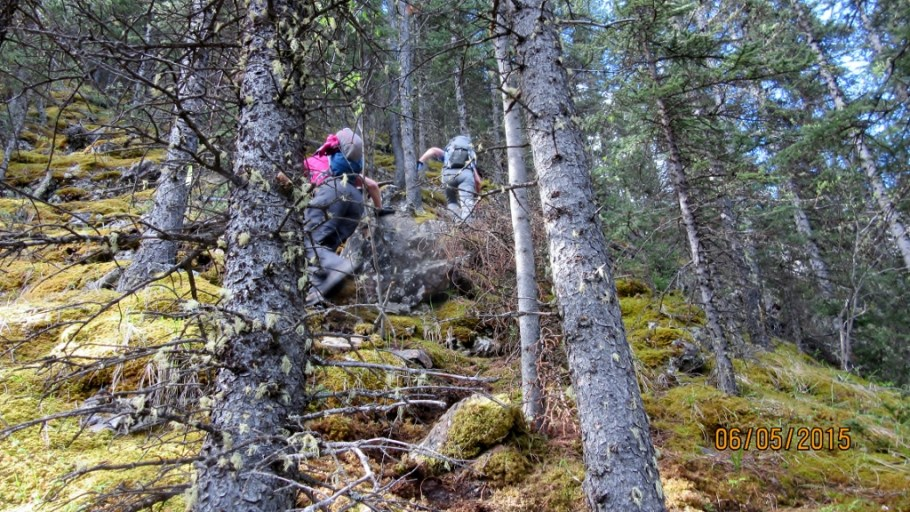 Steep going through trees and moss underfoot