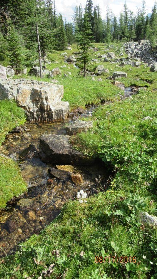 Stream feeding Lake Minewakun
