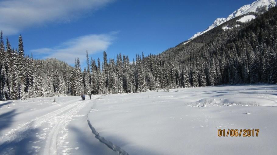 Meadow on the tyrwhitt Trail