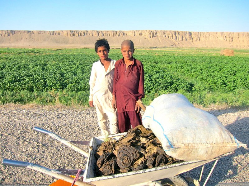 Afghan boys with some cheeky cow dung, in Mazar-e Sharif