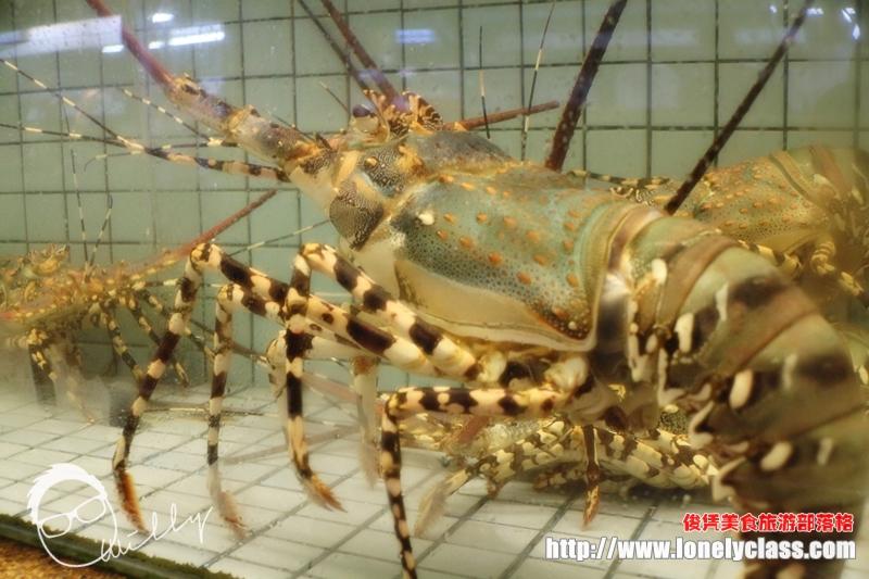 哇!这七彩龙虾还真的好大只!价格斐然!