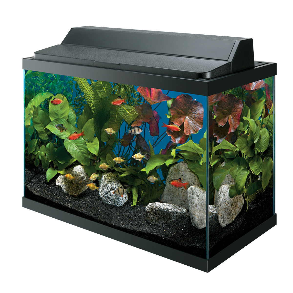 freshwater aquarium ms goodale
