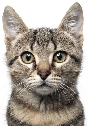 Cat Food For Older Cats With Kidney Problems
