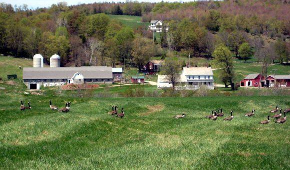 Spring Wheeler Farm by M. Towne