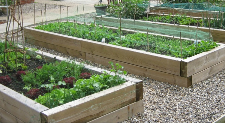 Vegetables Best Beds Raised