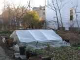 a mini-hoop house in the yard made out of the old plastic