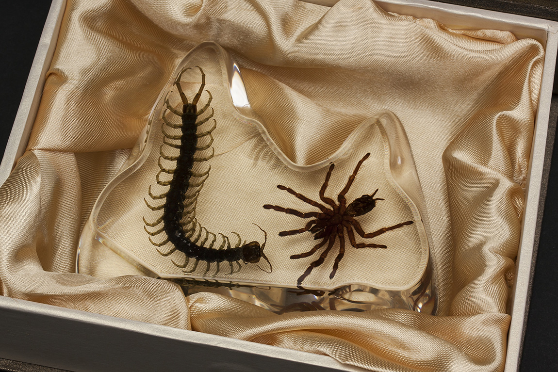 details about real centipede