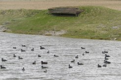 Decoy Ducks and Hunters Shelter at Hable D'Ault