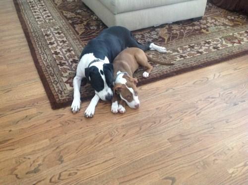 Adopting? How to adopt or foster a child ... - Adoption.com
