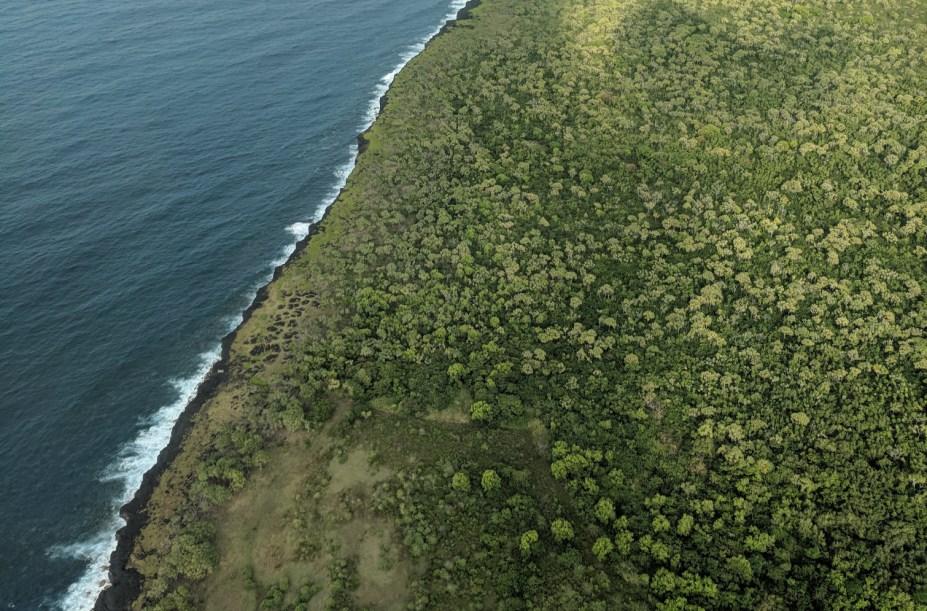 aerial hawaiian jungle