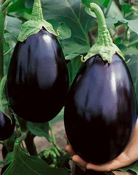 Black Beauty Eggplant Plants from Wimbee Creek Farm