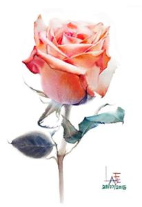LaFe Rose watercolor