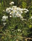 bloemscherm-wilde-bertram