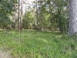 bos met kraaiheide