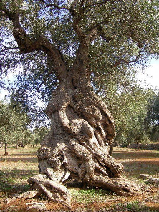 Forum Le Perle Del Cuore   arte naturale alberi