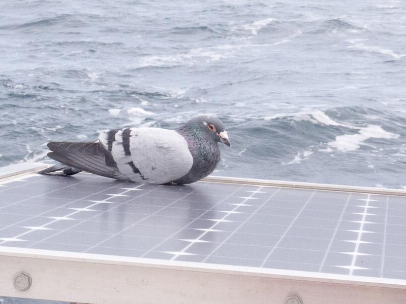 Norderney Ramsgate: blinder Passagier an Bord