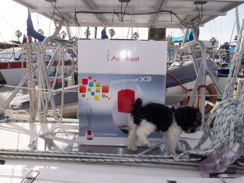 Airwheel mit Hund