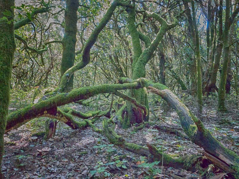 La Gomera: Zauberwald im Nationalpark Garanjonay