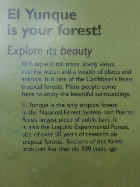 El Yunque: der Wald gehört uns