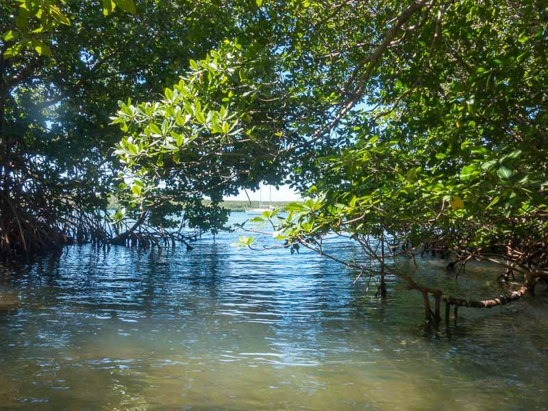 Puerto Ferro mit dem Dinghi in den Mangroven