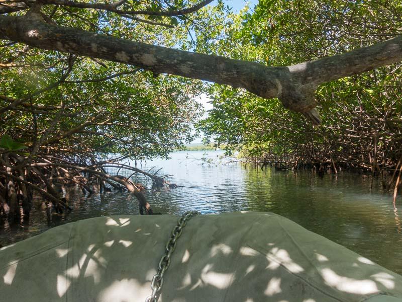 Puerto Ferro: mit dem Dinghy in den Mangroven