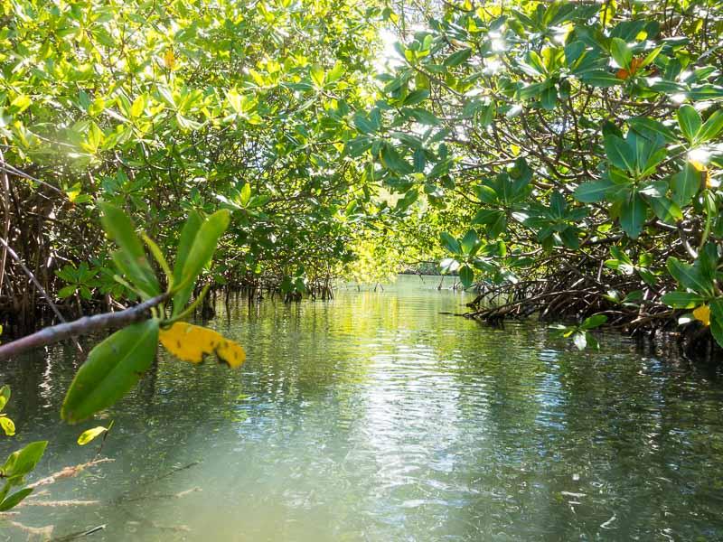 Puerto Ferro: Mangroven Wirrwarr
