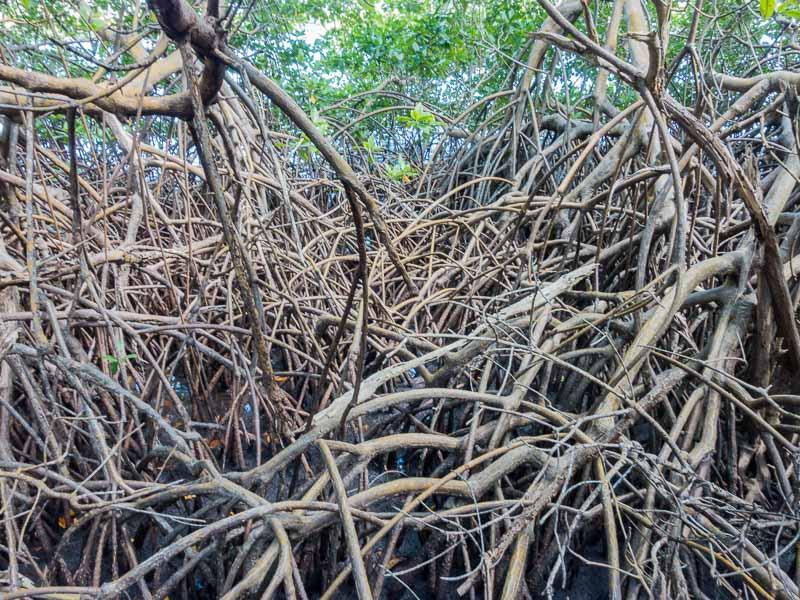 Vieques Inselrundfahrt: hier ist kein Durchkommen