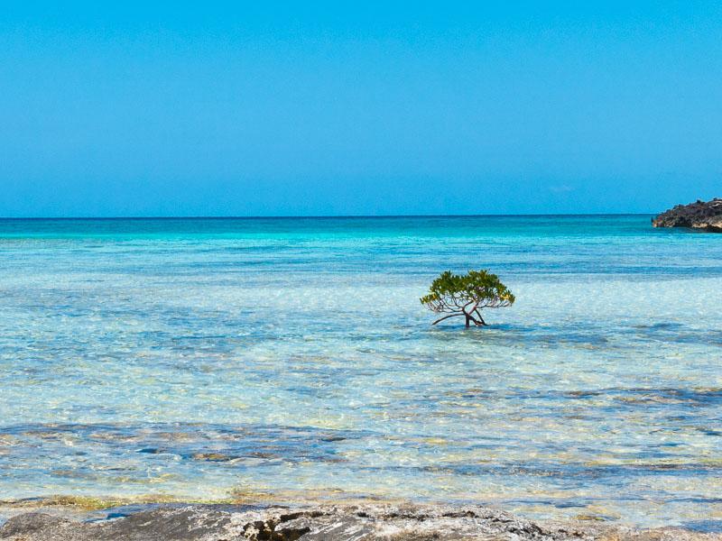 Mitsegeln auf den Bahamas: türkisfarbenes Wasser soweit das Auge reicht.