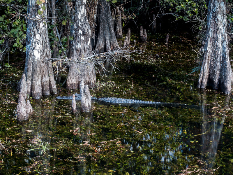 Everglades_2-39.jpg