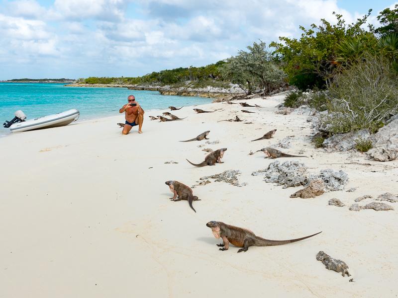 Iguanas auf Leaf Cay: die ganze Rotte
