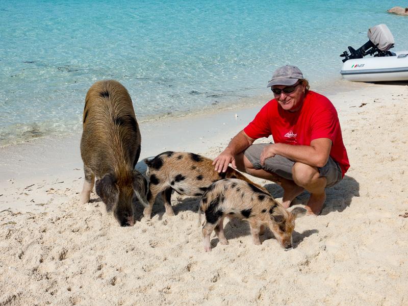 Unsere schwimmenden Schweine von Staniel Cay