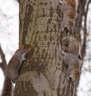 Three squirrels...