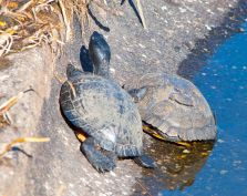 At the turtle pond