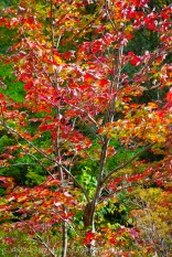 Mohonk Fall colors 7