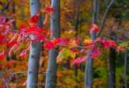 Mohonk Fall colors 15