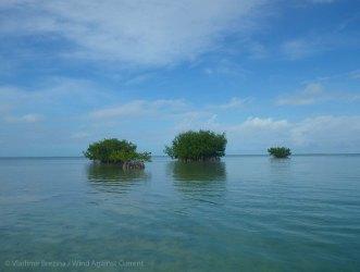 New islands