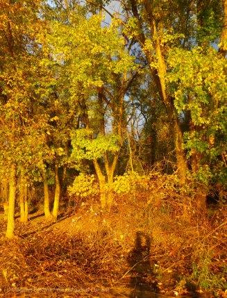 Lengthening shadows