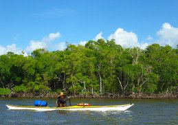 The first of a hundred miles of mangrove-lined riverbank