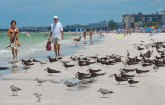 St. Pete Beach birds 10