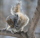 Squirrels 4