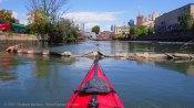 Gowanus Canal 2015 35