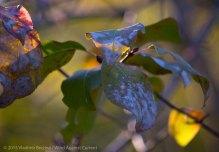 Fall Colors 2015 10