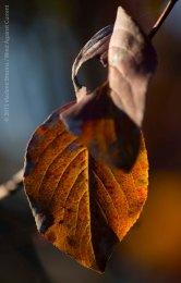 Fall Colors 2015 9