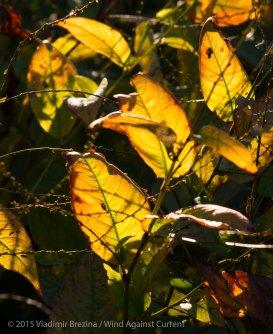 Fall Colors 2015 12