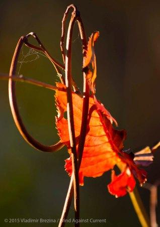 Fall Colors 2015 20