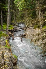 Spindly Creek