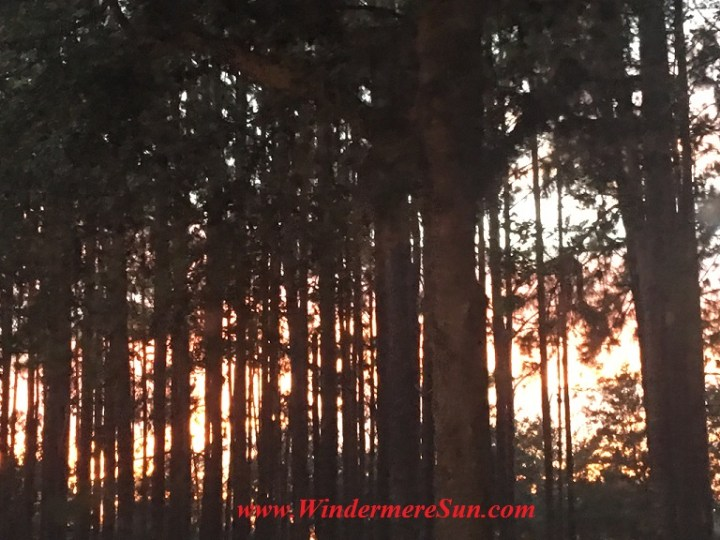 autumn-forest-final