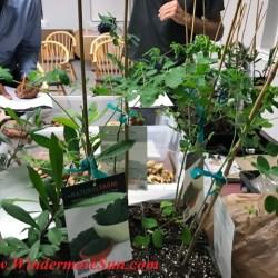 Plants from A Natural Farm (credit: Windermere Sun-Susan Sun Nunamaker)