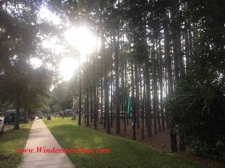 sun-shines-through-forest-final